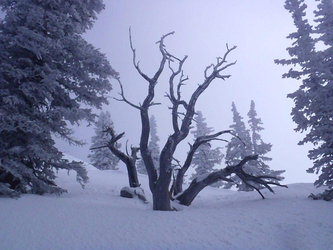 elation-tree.jpg